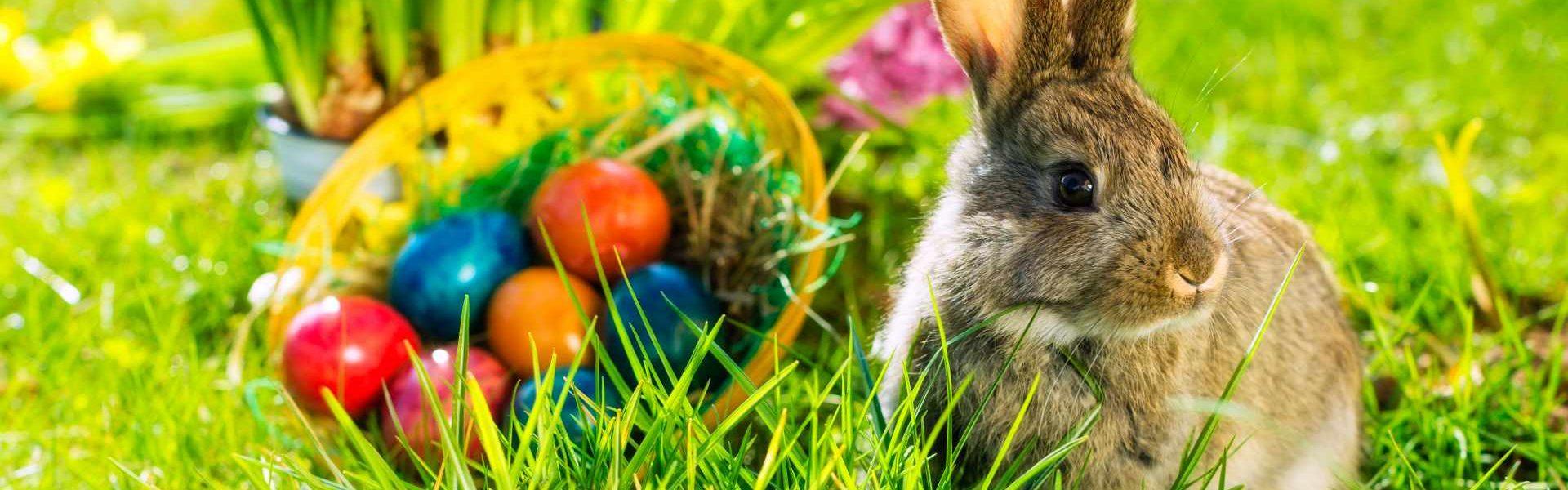 Egg Cellent Travels The Top 10 Easter Egg Hunts Around The World Hotelscombined Egg Cellent Travels The Top 10 Easter Egg Hunts Around The World