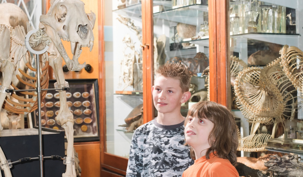 Zoology museum, London sightseeing guide