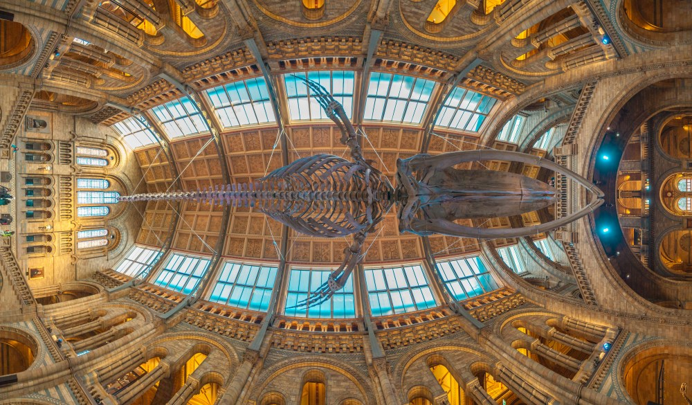 natural history museum, London sightseeing guide
