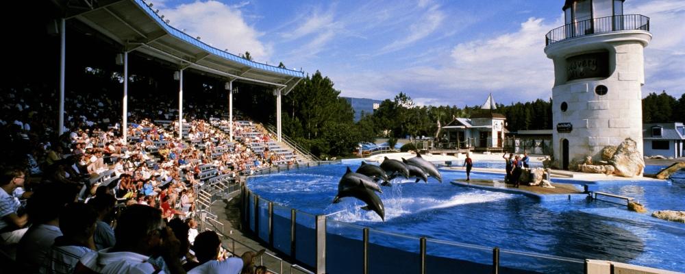 USA, Florida, Orlando, Sea World, performing dolphins