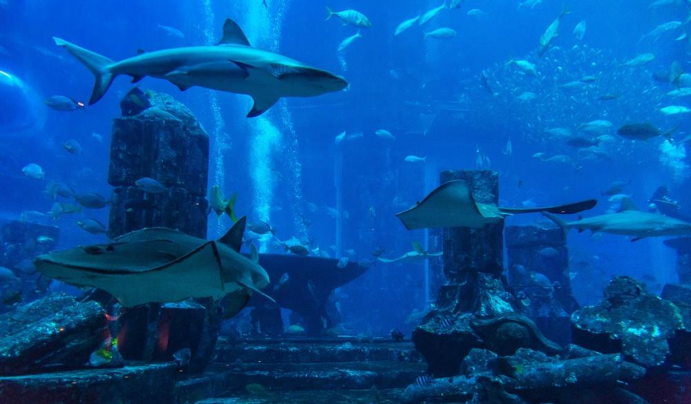 Large aquarium in Dubai,