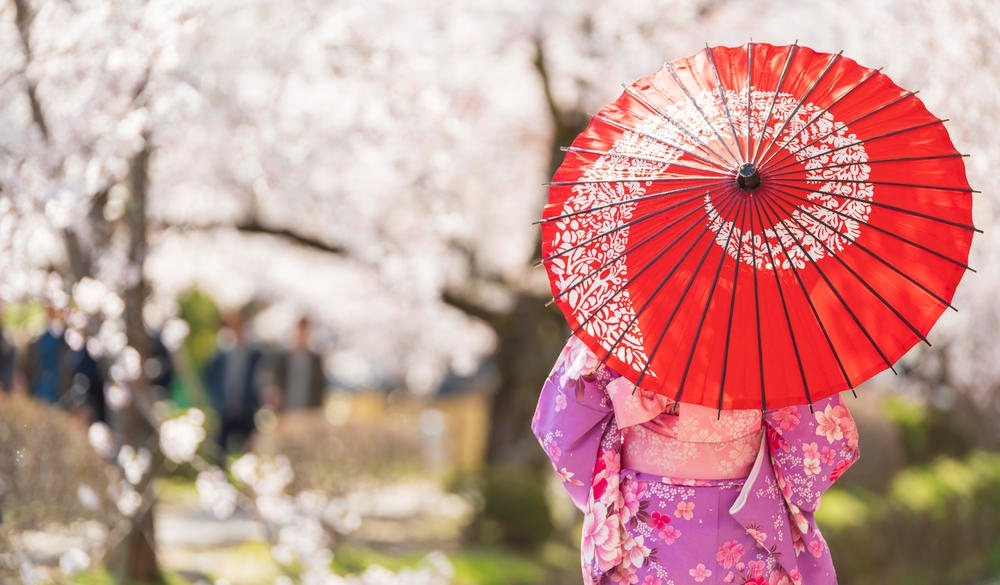 Young girls, dressed in Kimono with red umbrella standing with cherry blossom background, Japan