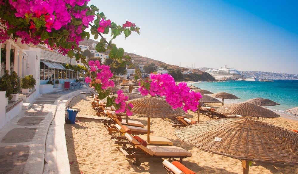 Flowering bougainvillea on the beach against the Mediterranean Sea
