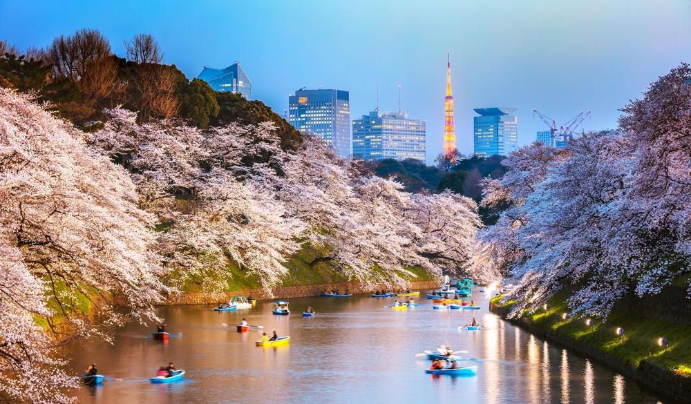 Chidorigafuchi moat during cherry blossom season at sunset, Tokyo, Japan