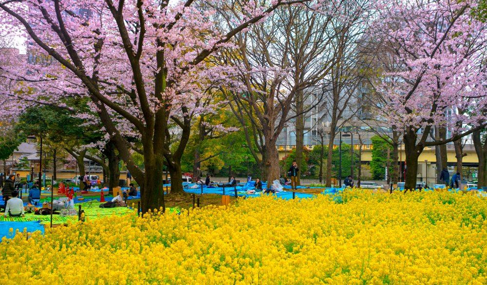 Yoyogi Park Tokyo,