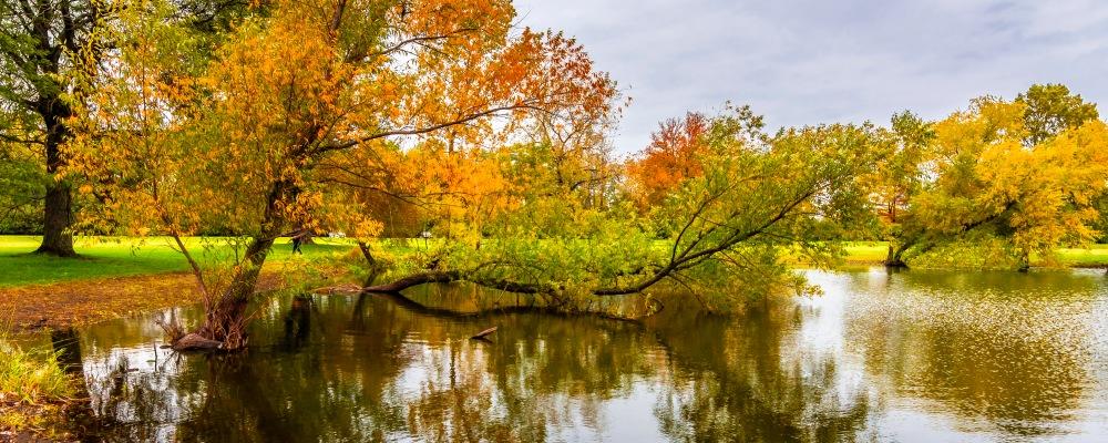 Schiller Woods view in Chicago of Illinois