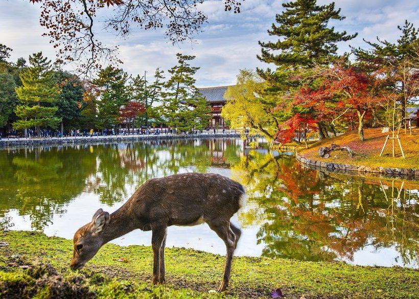 Unbeatable  Hotels in Nara Close to Deer Encounters, Shrines & More