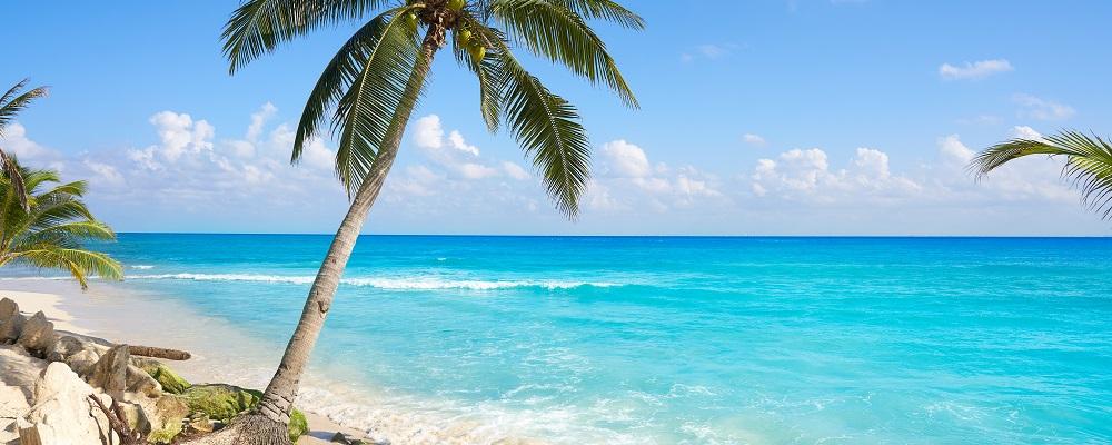 Playa del Carmen, Riviera Maya, palm tree on the beach
