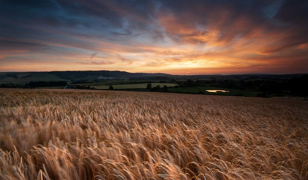 Amberley fields
