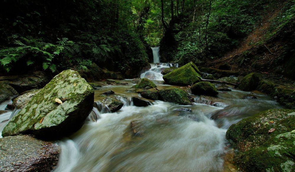 Beautiful jungle stream in Japan