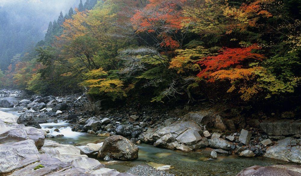 A peaceful stream in Japan