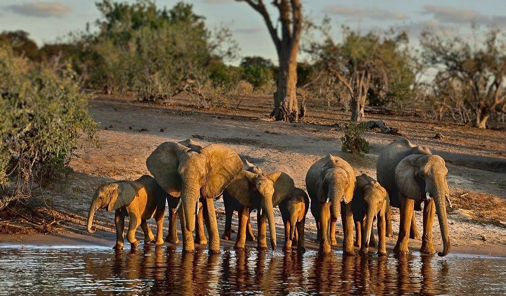 Safari Destinations in Africa Chobe National Park