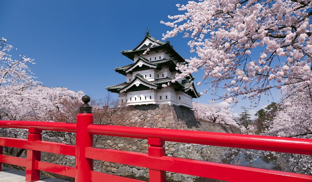 Fuji and Chureito pagoda with cherry blossoms