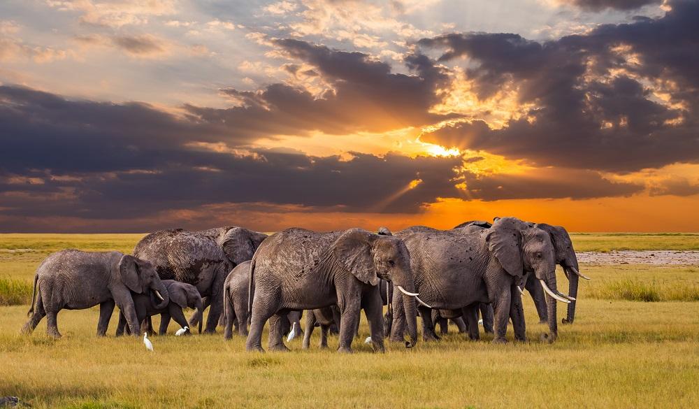 Safari Destinations in Africa Serengeti National Park