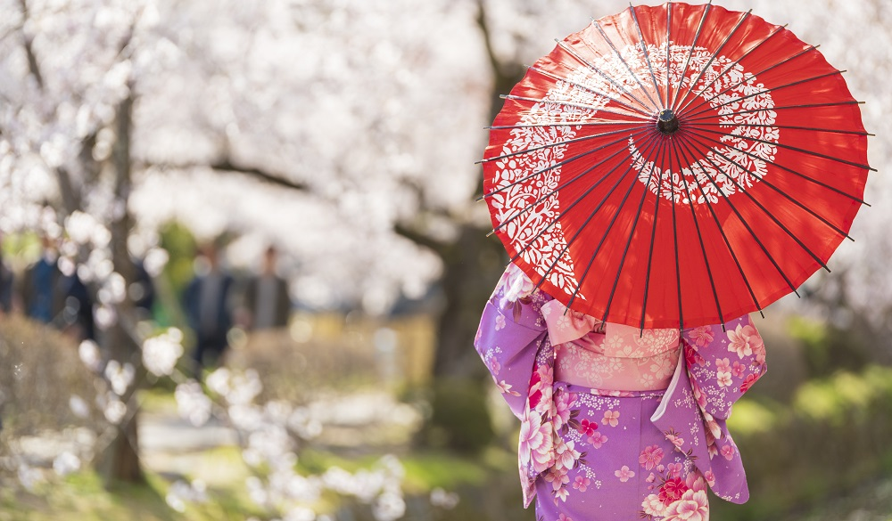 dressed in Kimono with red umbrella and with cherry blossom