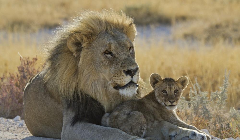 Safari Destinations in Africa Etosha National Park