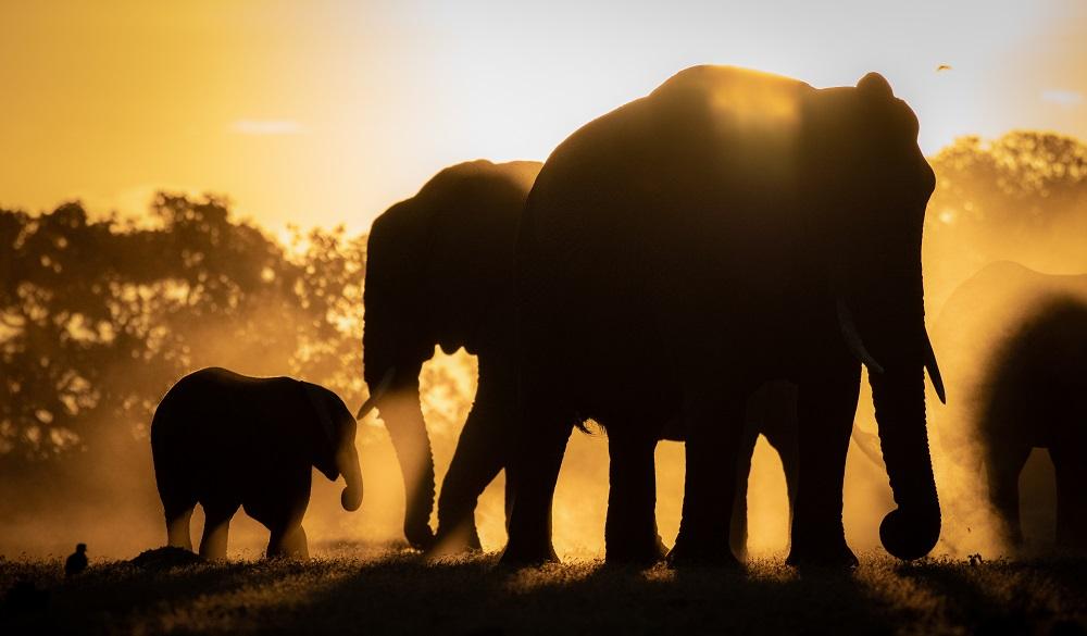 Safari Destinations in Africa Kruger National Park