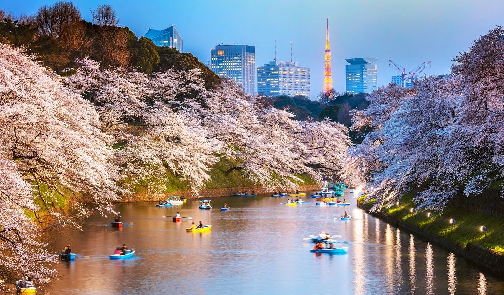 Chidorgafuchi moat at night with cherry blossom