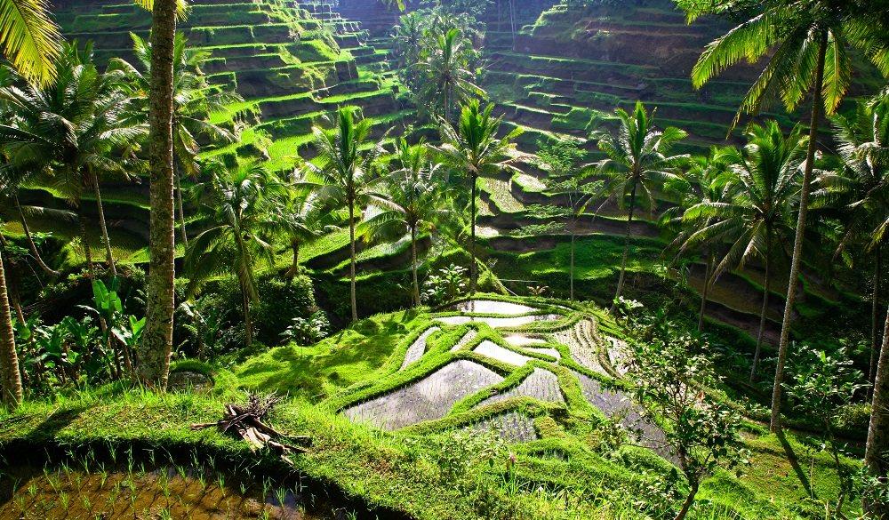 Ubud visit indonesia