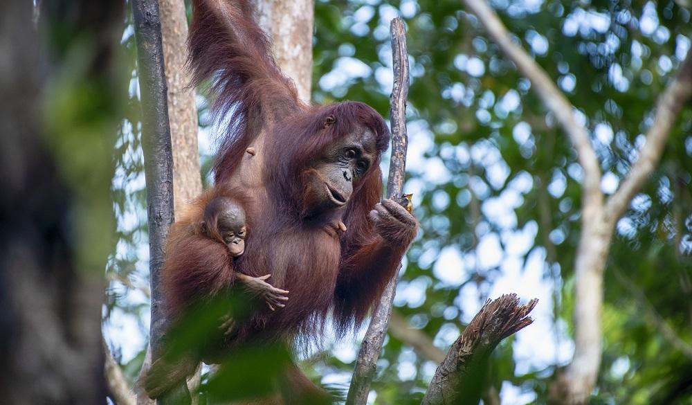 Tanjung Puting National Park, visit indonesia