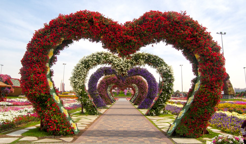 Dubai miracle garden is famous for heart shape installation