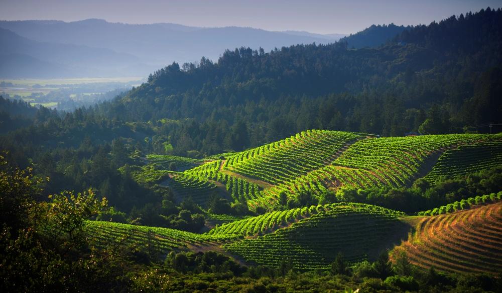 Vineyards of Diamond Mountain with Napa Valley