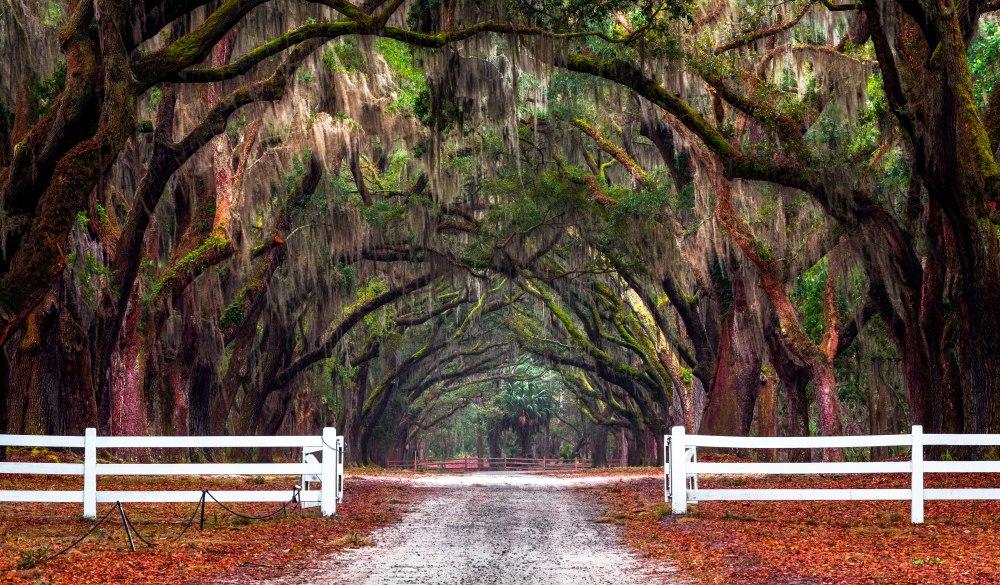 Wormsloe Historic Site, Savannah, affordable romantic getaways