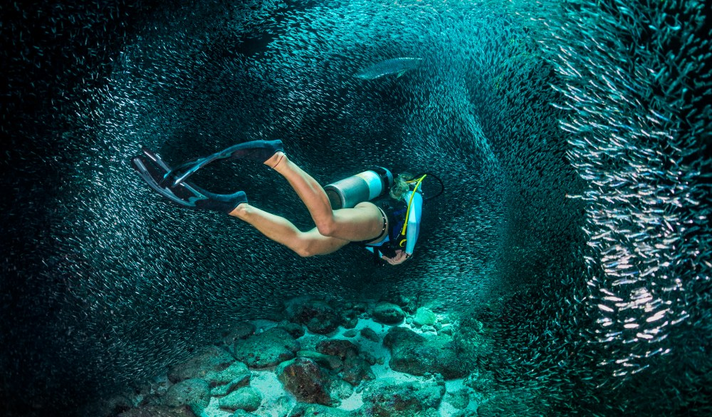 Female scuba diver swimming with the school of fishes.
