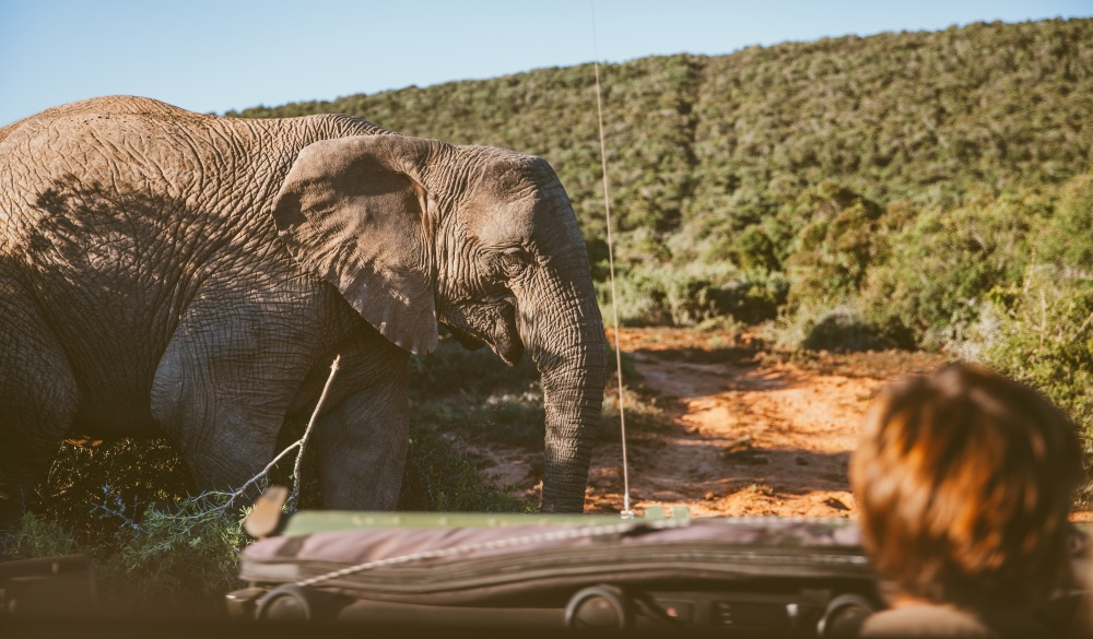 Off-Road vehicle at safari in South Africa, best wildlife encounters