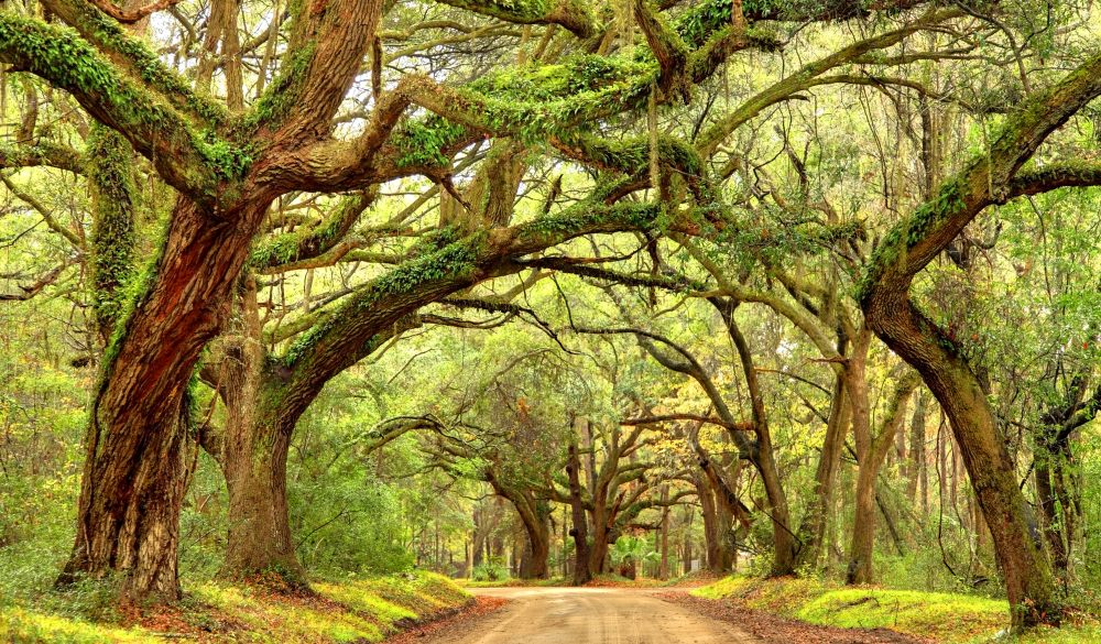 Giant oak trees draped with spanish moss line a scenic road in the South Carolina, underrated U.S. destinations