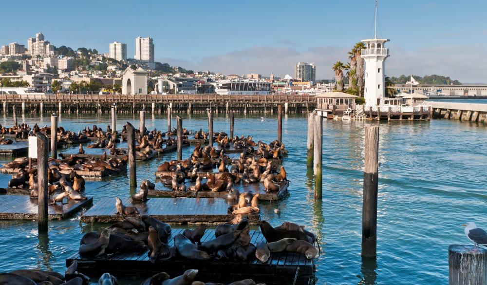 San Francisco Fisherman's Wharf sea lion colony harbor lighthouse California
