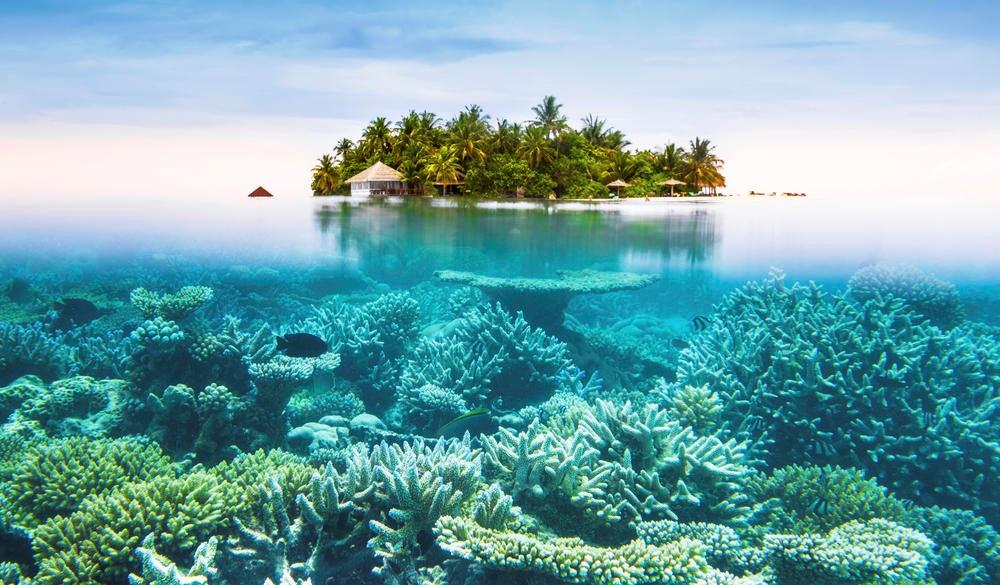 Maldives tropical islands and corals, tropical island vacations
