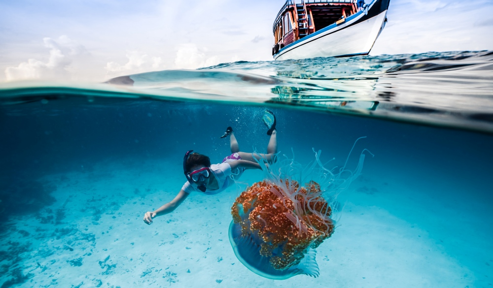 A snorkeler observing a jellyfish in the Indian Ocean near the Maldives, snorkelling spot