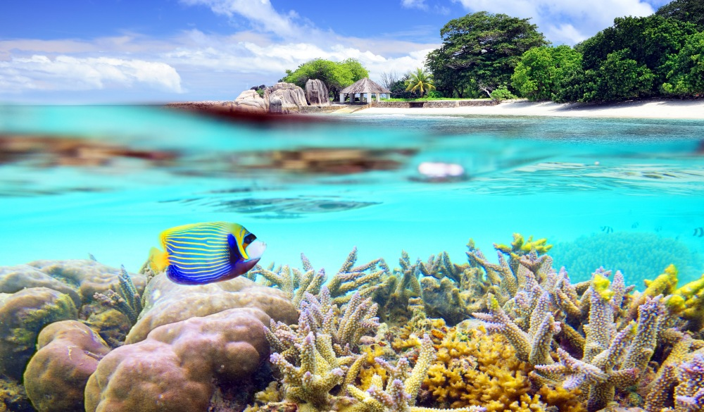 corals and island view, tropical island vacations