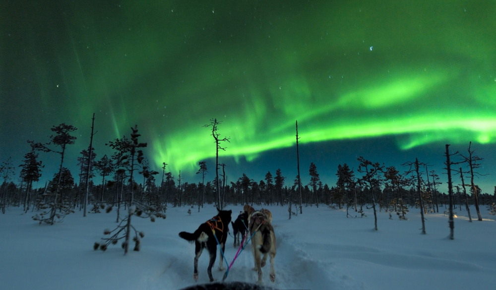 Aurora Dog Sledding, Finland.
