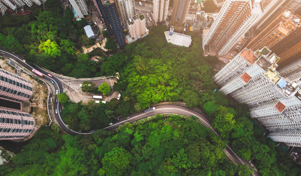 forest against buildings in Hong kong