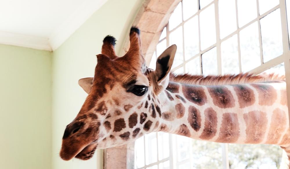 Giraffe Manor Hotel Nairobi, Kenya, unique hotel