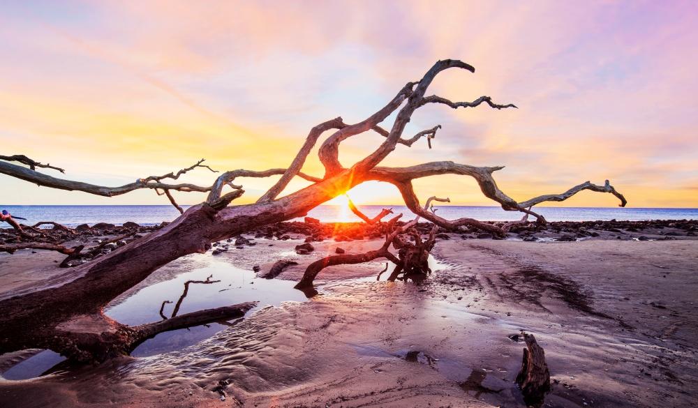 Georgia's Driftwood Beach