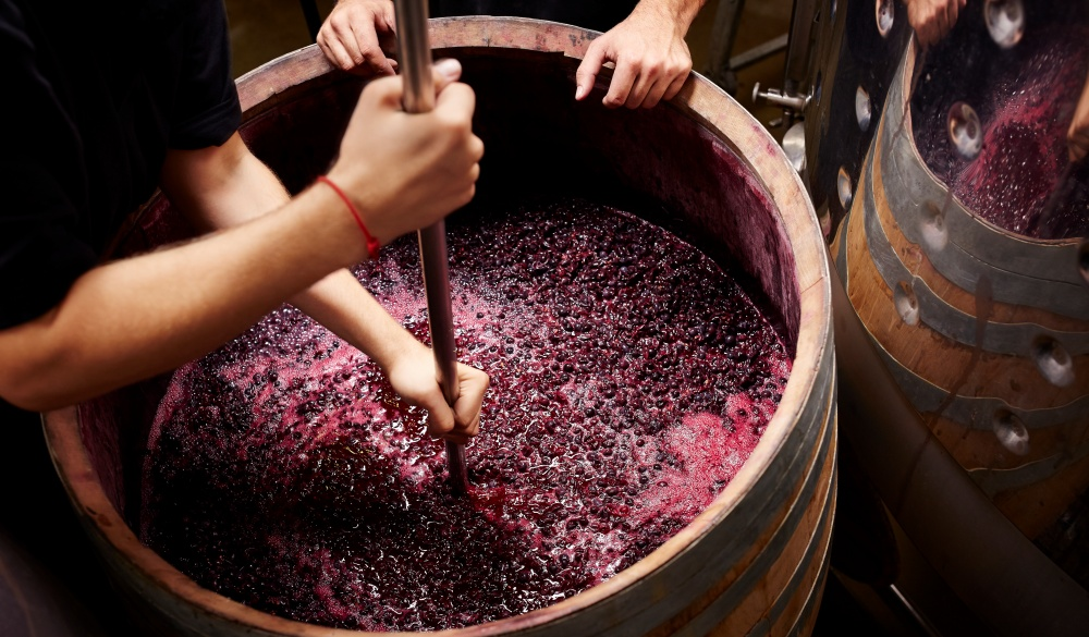 Plunging the grapes cap to extract color, wine tasting in Australia