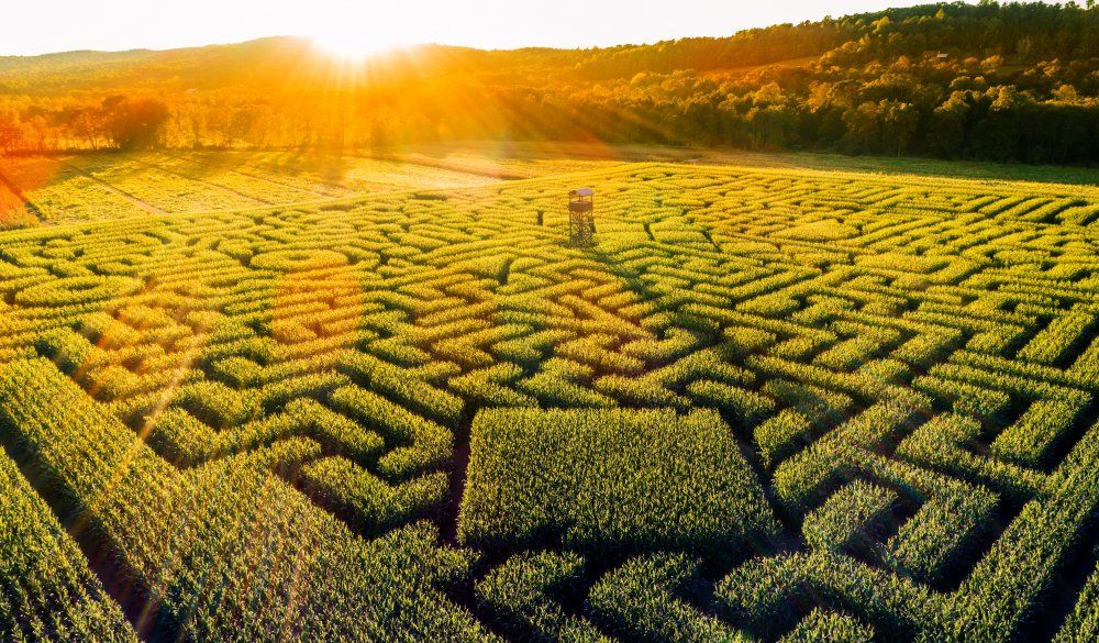 view to the huge Halloween's Corn Maze in Pennsylvania,