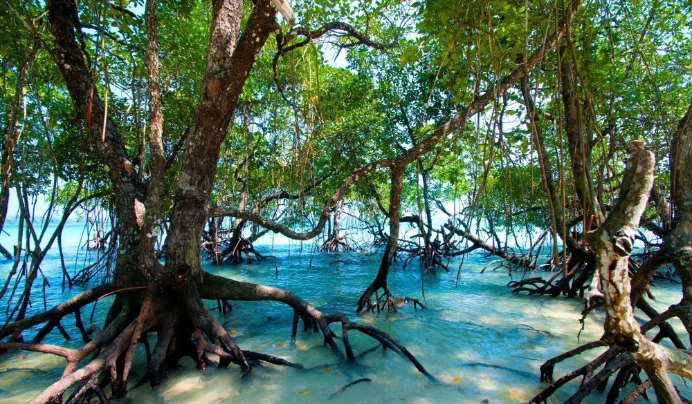 Havelock island, Andaman and Nicobar, India