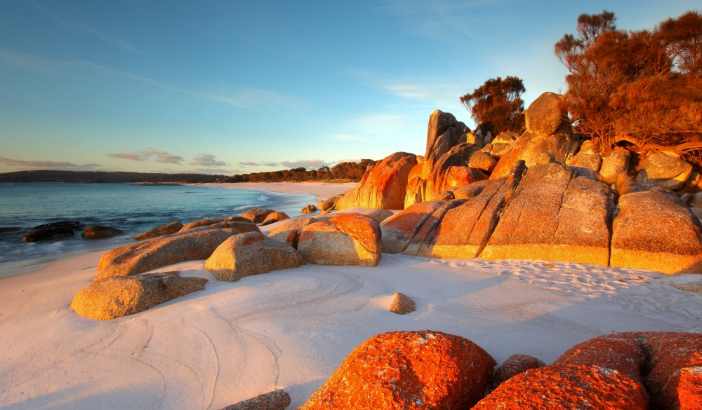 Red lichen on rocks at Bay of Fires