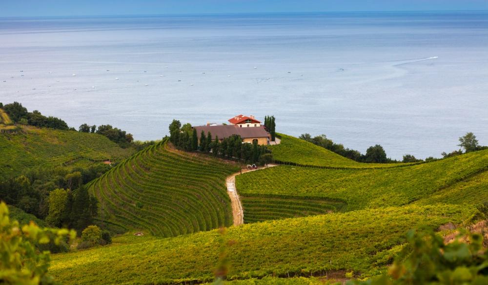 The vineyards of Getaria, travel gems in europe