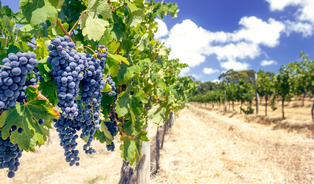 Where to Go Wine Tasting in Australia: A Full-Bodied Guide