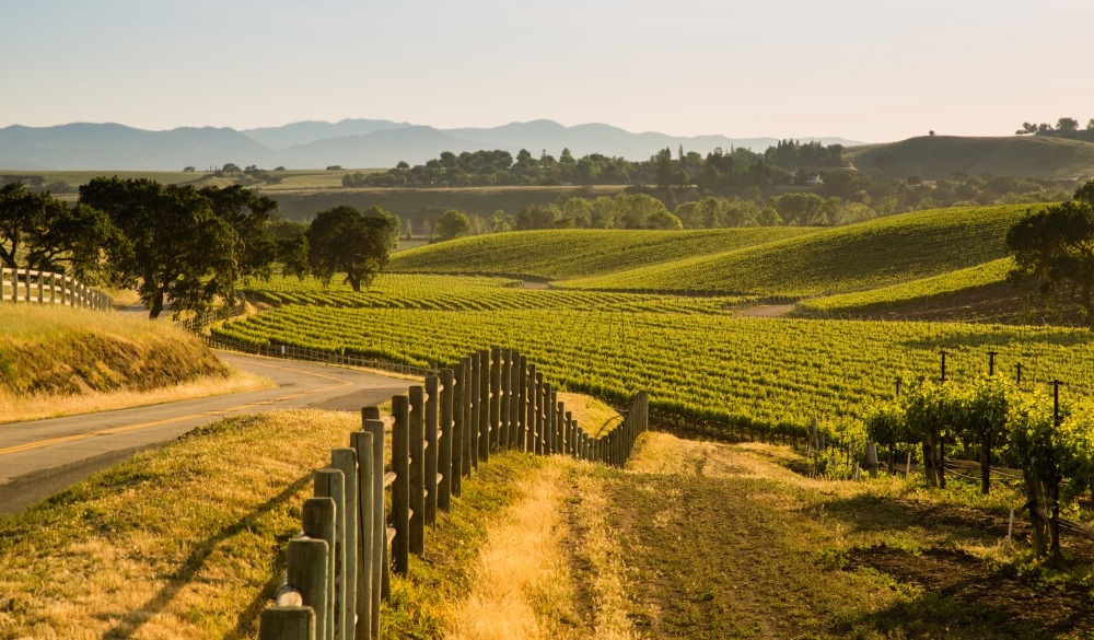 Road Next To Lush California Viineyard, Santa Ynez, CA
