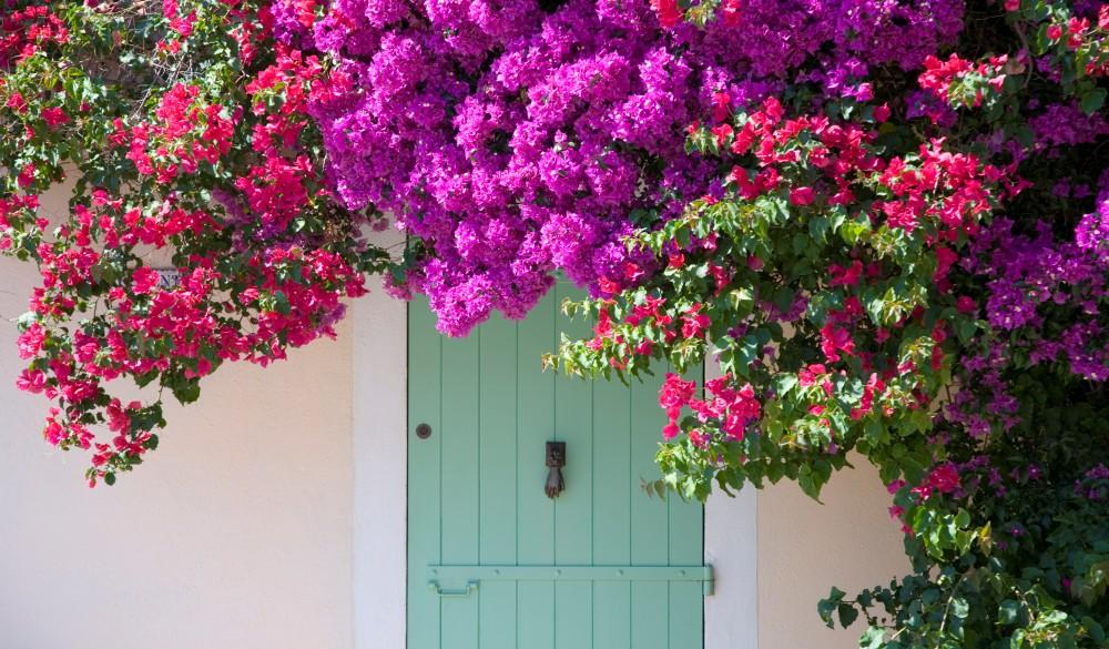 Door shaded by bougainvillea, Porquerolles, France