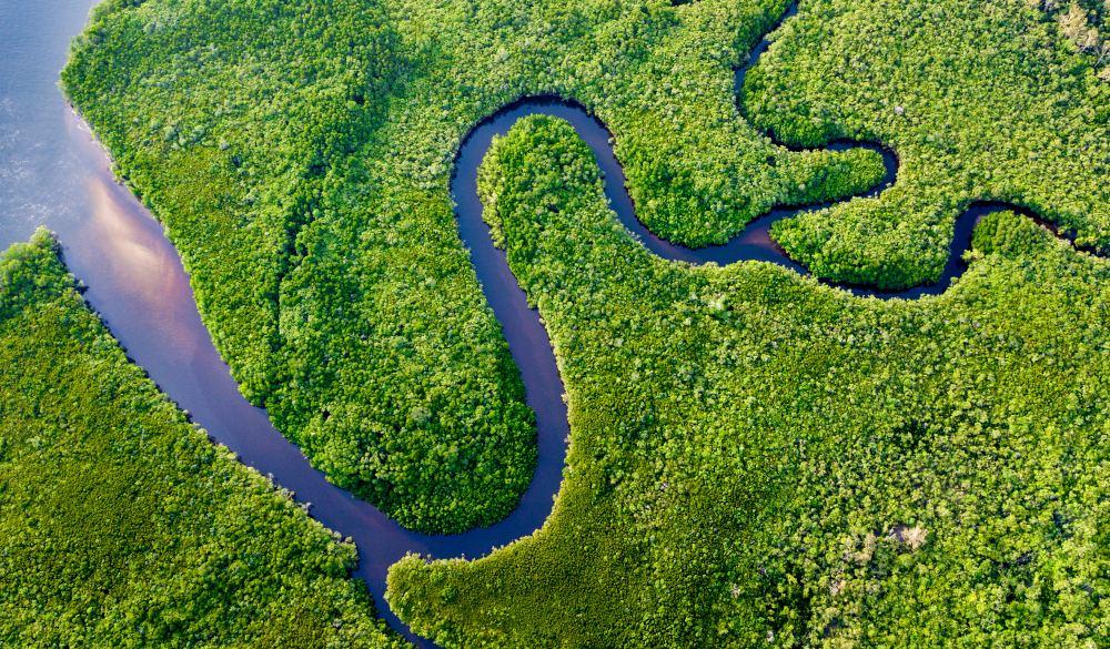 Daintree River Bends
