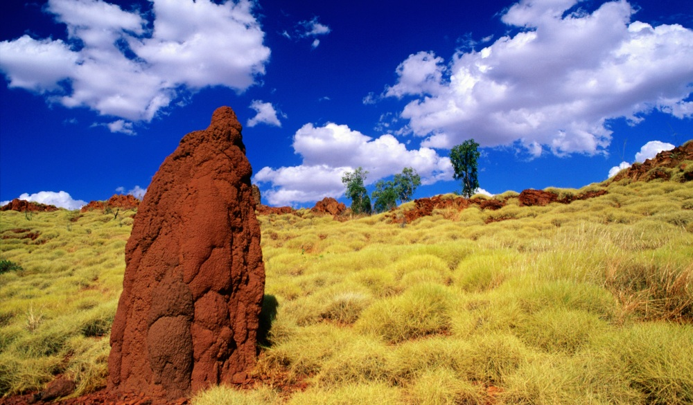 Termite mounds in outback