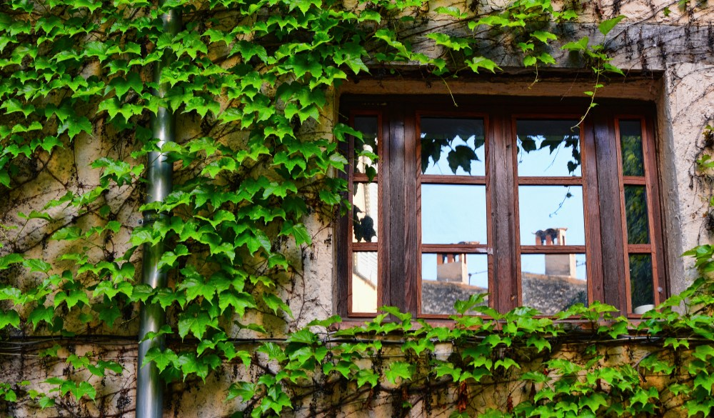 Chimney reflected on window of house wall covered by climbing ivy, France