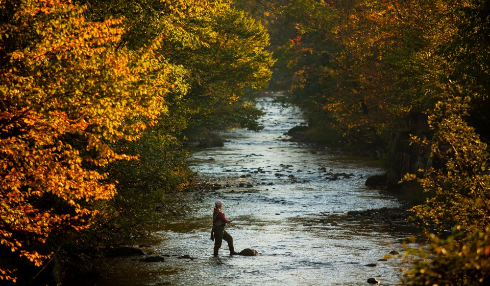Woman Fly Fishing in Autumn